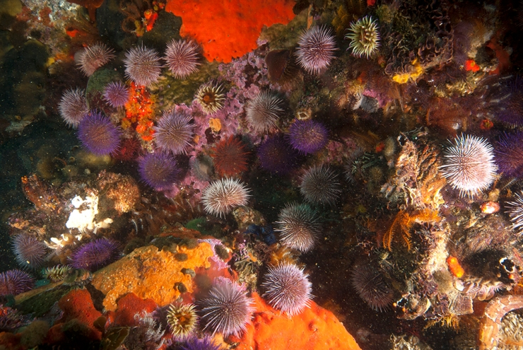Anenome and Urchins #1