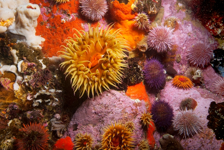 Anenome and Urchins #2
