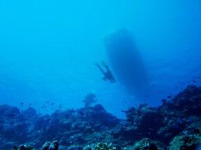 "The Reef Encounters Taiwanese ""bertram"" as seen from 20m below"