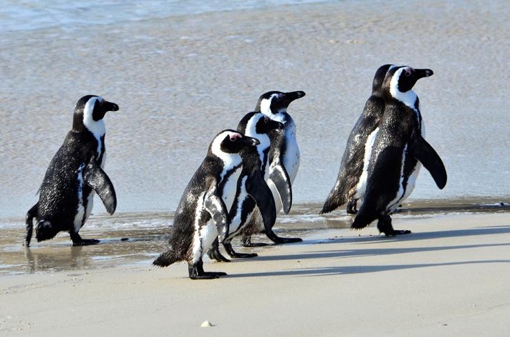 Penguins #1