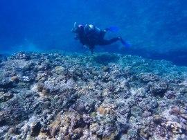 reef okinawa 2