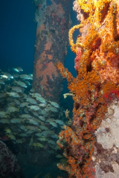 Caesar Grunts 3, Dive Dominica Jetty