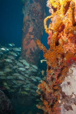 Caesar Grunts 3, Dive Dominica Jetty