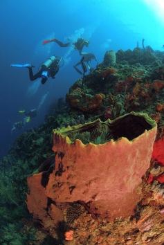 Divers and Barrel Sponge, L'Abym