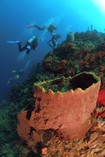 Divers and Barrel Sponge, L'Abym