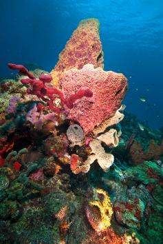 Sponges, L'Abym