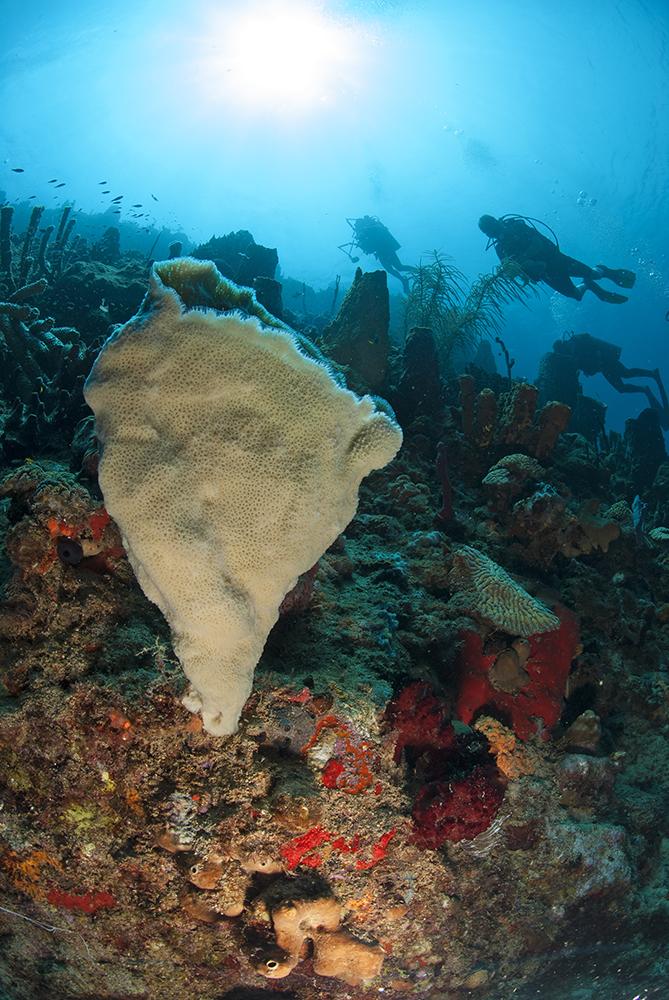 Vase Sponge, L'Abym