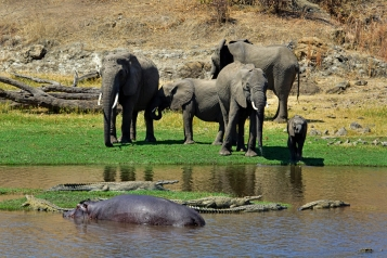 Elephants, Hippo and Crocs