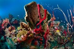Reef Scene - Black Forest #1
