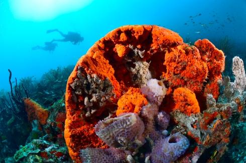 Reef Scene - Black Forest #2