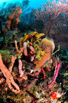 Reef Scene - Black Forest #3