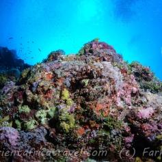 Yap is stunning underwater